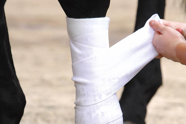 Horse Care – Protecting A Horse's Legs With Bandaging